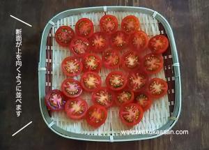 petit_tomato_ready_to_dry