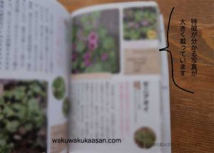 botanical_picture_book_inside