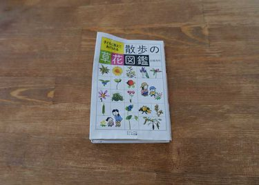 雑草の花粉症持ちは必携!散歩の草花図鑑